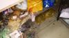 В двух кишиневских кафе еда готовилась в антисанитарных условиях (ФОТО, ВИДЕО)
