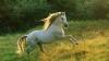 Ученые: Подчинение людям заложено в генетическом коде лошадей