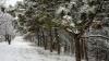 В Молдове до сих пор борются с последствиями вчерашнего снегопада
