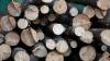 Четверо жителей села Заим задержаны за незаконную вырубку деревьев