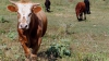 Таджикских солдат задержали по обвинению в краже коров