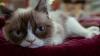 """Хозяйка """"сердитой кошки"""" зарабатывает больше, чем голливудские звезды"""