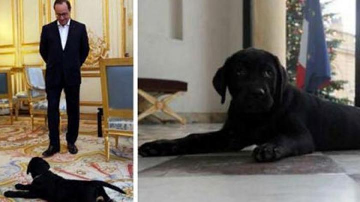 Франсуа Олланду подарили щенка черного лабрадора
