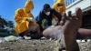 В Нигерии зафиксирована вспышка холеры