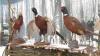 В Яловенском районе состоялся праздник охотников: вместо ружий поварешки