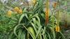 Впервые за последние 30 лет в Ботаническом саду расцвел редкий вид алоэ