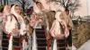 Колядующие готовят костюмы и составляют репертуар праздничных песен
