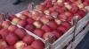 Россия вернула в Белоруссию за последние два дня более 200 тонн фруктов и овощей