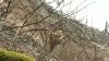 Гигантский чудо-гриб в Шолданештском районе: мутация или глобальное потепление