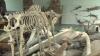 Экспонаты Музея естественных наук Госуниверситета хранятся в ненадлежащих условиях