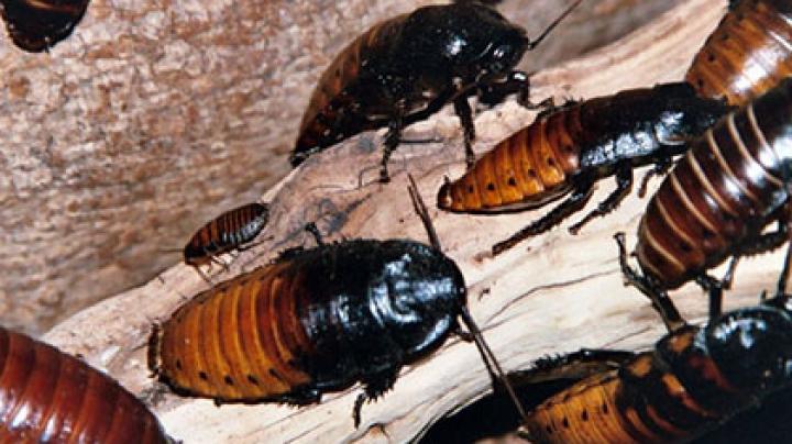 Одиноким жителям Сан-Франциско предложили взять шефство над тараканами