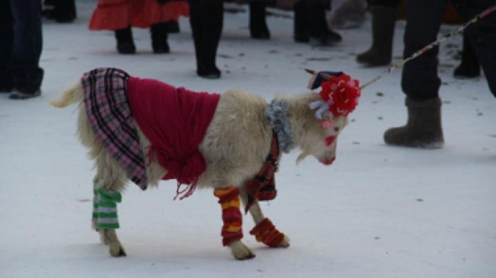 В Татарстане прошел конкурс красоты среди коз