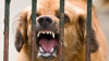 В Молдове растет число животных, заболевших  бешенством