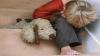 В Оргеевском районе мать жестоко избивает детей и винит во всем бывшего мужа