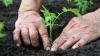 Фермеры: в этом году и рассада и ранние овощи подорожают