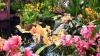 В ботаническом саду Нью-Йорка уже весна: зацвели орхидеи