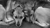 Решение проблемы бездомных животных: видение НПО