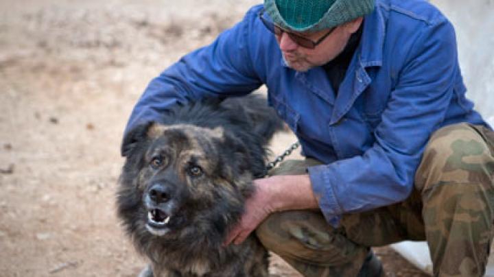 Суд пригрозил хорвату штрафом в 2,8 тысячи евро за лай собаки