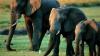 В Ботсване обсуждают защиту слонов от браконьеров