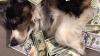 Сладкая жизнь собак миллионеров (ФОТО)