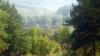 Международный день лесов: сколько в Молдове лесных массивов