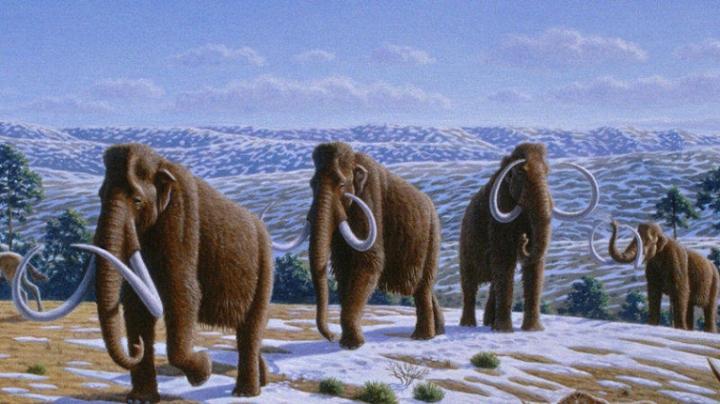 Ученые: в будущем мамонты снова могут появиться в тундре