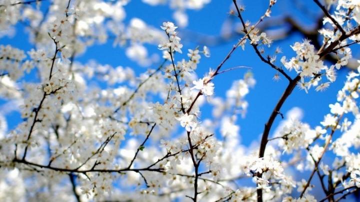 Каждый год весна становится короче на 30 секунд