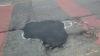 Британский художник борется с ямами на дорогах с помощью пенисов (ФОТО)