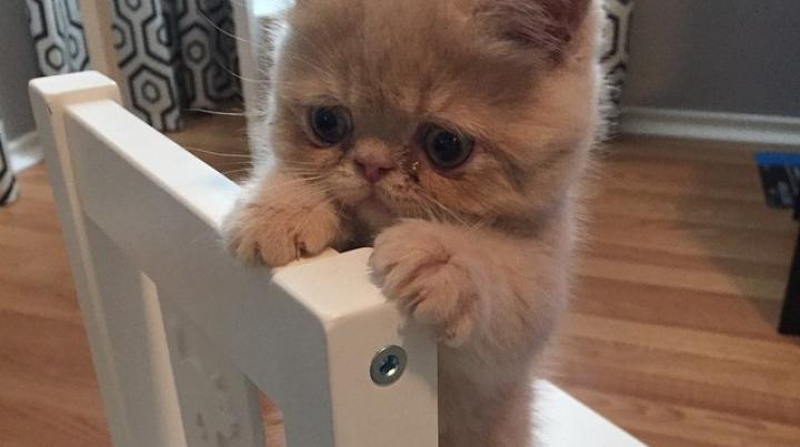 Кот Джордж, стоящий на задних лапах, взорвал интернет (ФОТО)