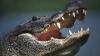 К гольфистам Нового Орлеана присоединился аллигатор (ВИДЕО)