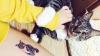 Татуировки с домашними питомцами - новый тренд в Южной Корее (ФОТО)