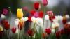 Последний звонок - праздник торговцев цветами