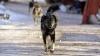 В Леова бездомные собаки терроризируют местных жителей