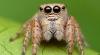 """Американские ученые расслышали у пауков """"музыку любви"""""""