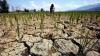 Продолжающаяся засуха может погубить урожай в Молдове