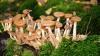 В Молдове открыт сезон отравления грибами: 13 жертв за два месяца