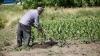 Крестьяне из села Пырлица Фалештского района обвиняют работодателя в задержке зарплаты