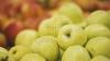 Россия частично отменила эмбарго на ввоз молдавских фруктов