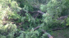 В Комратском районе задержаны лесорубы-браконьеры (ВИДЕО)