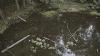 """Озеро в парке """"Долина роз"""" оказалось на грани экологической катастрофы"""