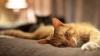 Застрявший в тапочке кот насмешил весь мир (ВИДЕО)