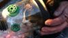 Пожарные Нового Орлеана откачали кошку с помощью кислородной маски (ФОТО)