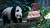 Панда Цзя-Цзя отметила 37-летие двумя мировыми рекордами