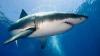 Исследователи: акулам нравится слушать метал