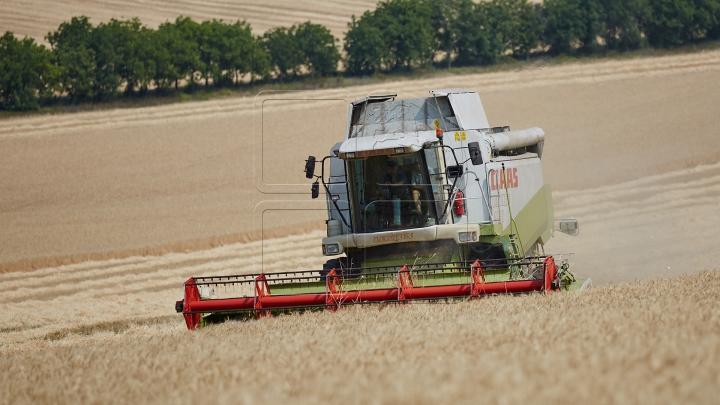 Молдавские фермеры собирают урожай зерновых (ФОТОРЕПОРТАЖ)