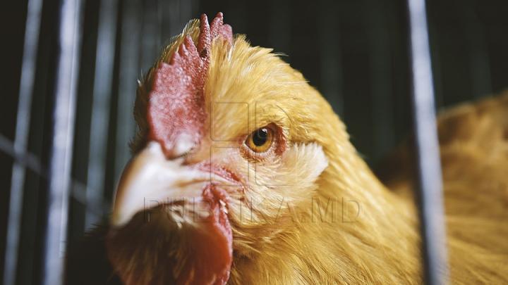 В селе Кицканы курица выкопала гранату времен 1992 года (ФОТО)