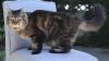 Кота Вельвета из США признали самым старым на планете