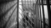 Сбежавший из-под стражи заключённый задержан полицией