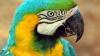 В Индии попугая забрали в полицию за сквернословие