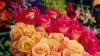 Россия может запретить ввоз цветов из Чехии и Словакии